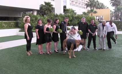 Dog Serves as Ring Bearer, Ruins Wedding Photos