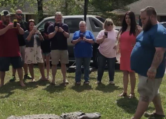 alligator gender reveal