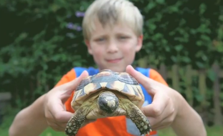 Missing Tortoise Found After 5 Days, Half a Mile