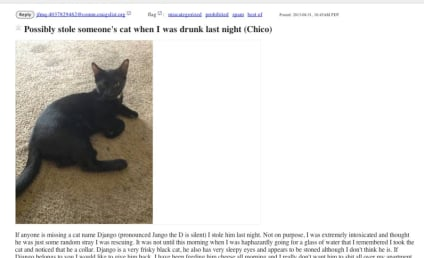 Drunk Dude Steals Cat, Feels Bad the Next Day, Posts Apology on Craigslist