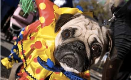 13 Dogs Here to Help You Get Over a Fear of Clowns