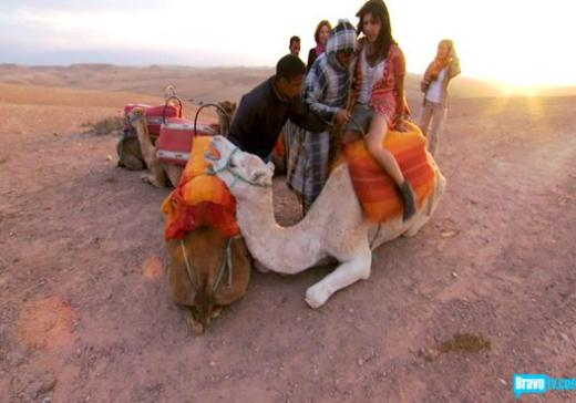 Camel Woe