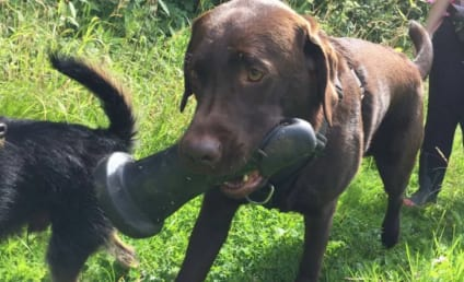 Dog Fetches Dildo for Owner, Refuses to Put It Down