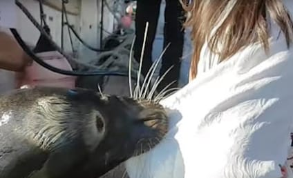 YIKES! Sea Lion Yanks Girl Into Water, Scares Ish Out of Internet