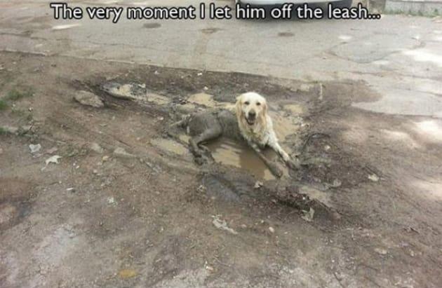 Muddy Buddy