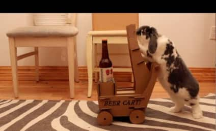 Pet Bunny Pushes Homemade Cart, Delivers Beer to Parched Owner