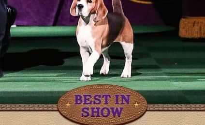 2015 Westminster Dog Show: Who Won?!?