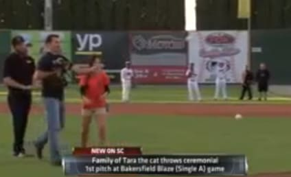 Hero Cat Throws Out First Pitch at Baseball Game (With Assist From Owner)