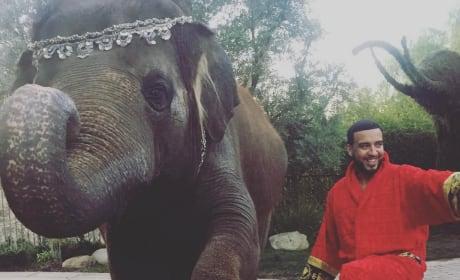 French Montana and an Elephant
