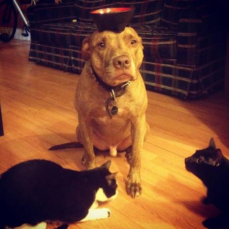 Dog Balances Cat Food Bowl