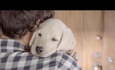 Adorable, Inspiring Budweiser Commercial