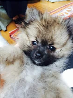 Miley Cyrus, New Dog Pic