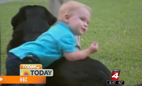 Family Dog Reveals Abusive Babysitter