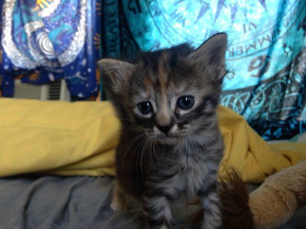 Such a Sad Kitty