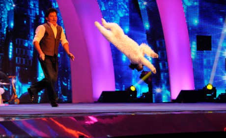 Olate Dogs on America's Got Talent