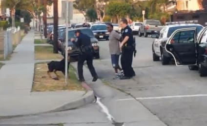 Police Kill Dog in California, Disturbing Footage Captured on Camera