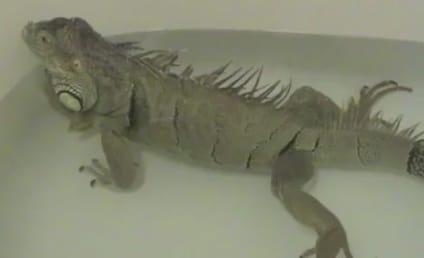 Iguana Farts in Bathtub, Is Hilarious