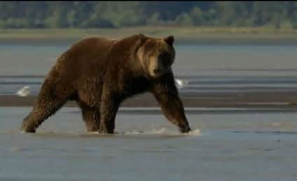 Bears Trailer: Disneynature Returns To Theaters This Earth Day