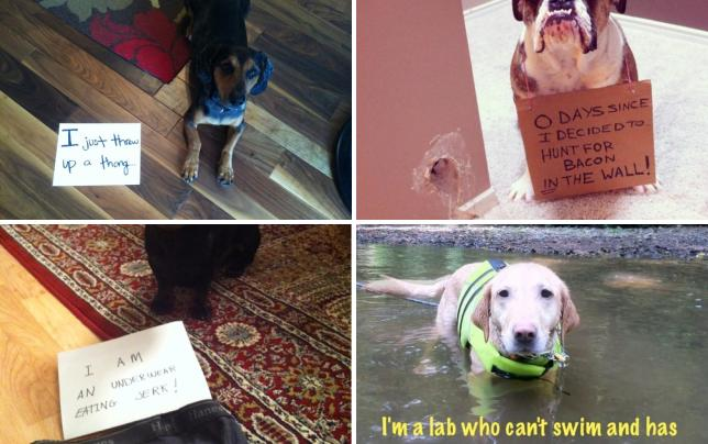 19 dogs being shamed by their owners thong vomiter
