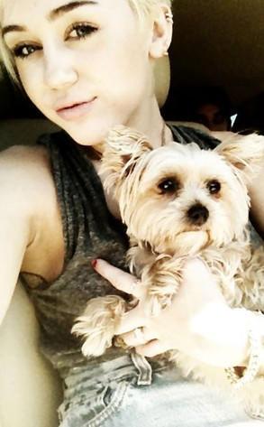 Miley Cyrus, Dog