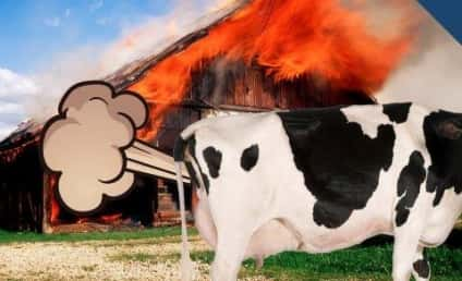Cow Farts Make Barn Explode in Germany