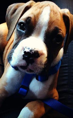 Lamar and Khloe Puppy