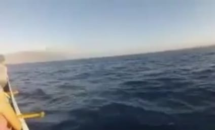 Whale Hits Canoe, Startles Couple in Hawaii