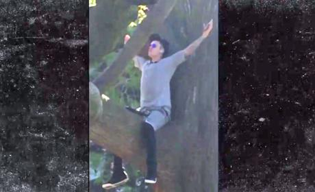 Justin Bieber Has Epiphany, Acts Like Jesus in a Tree