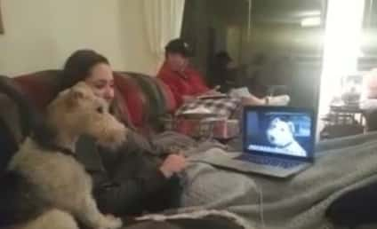 Dogs Skype, $h!t Gets Heated