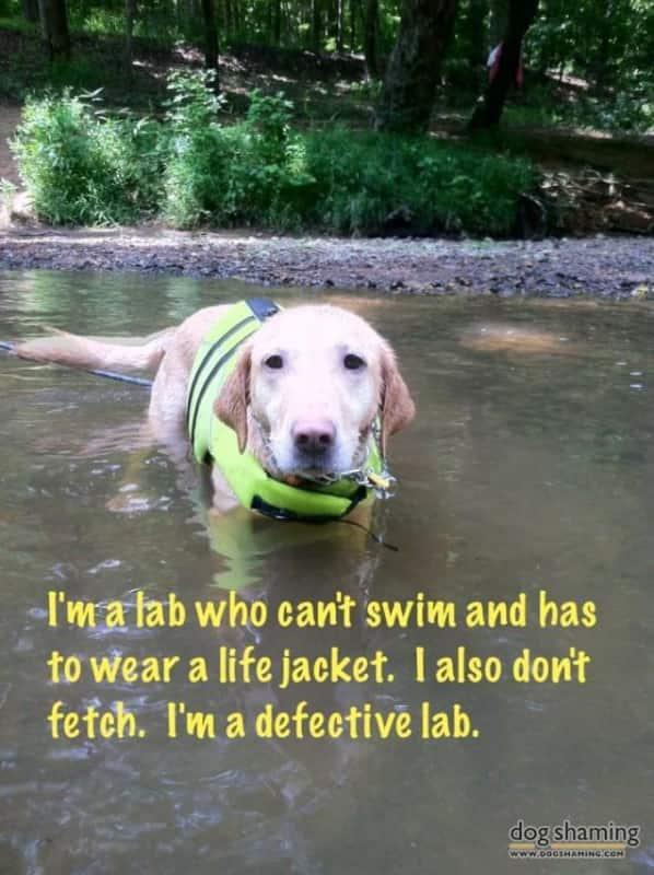 A defective lab.