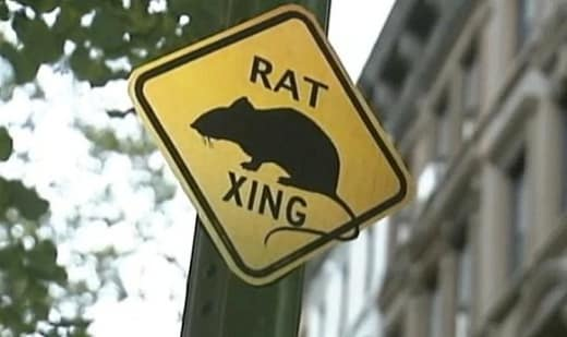 Rat xing sign