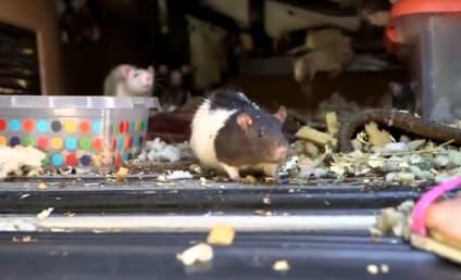 圣迭戈女子在凡有超过300大鼠找到生活