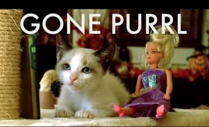 Kittens Recreate Gone Girl, Present... Gone Purrl!