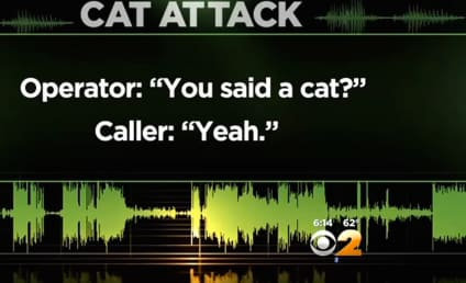 "Listen to This Man Call 911 Over ""Aggressive"" Pet Cat"