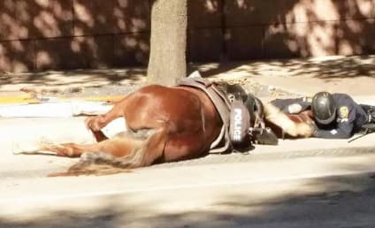 Police Officer Embraces Dying Horse in Heartbreaking Photo