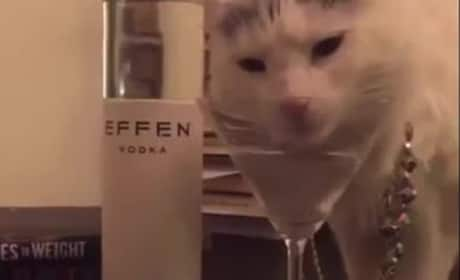 50 Cent Posts Video of Cat Slurping Vodka, 'Cuz Obviously