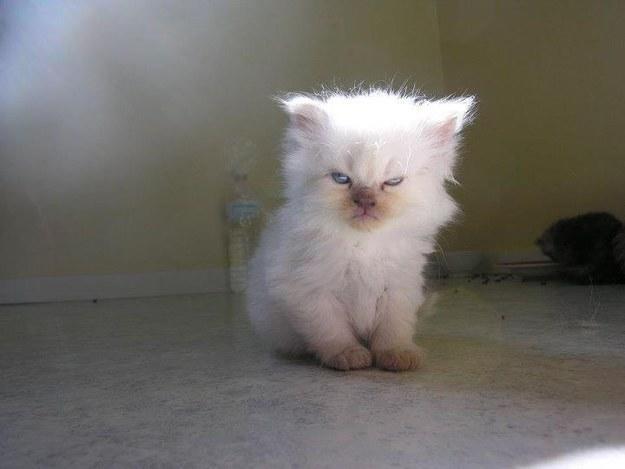 Grumpy Kitten