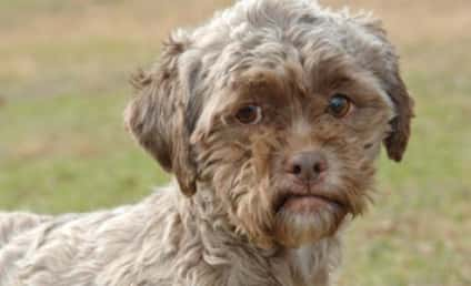 Dog with Human Face: Available for Adoption!