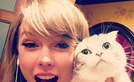 Taylor Swift, Cat Photo