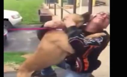 Dog Reunites with Owner After 2 Years, Goes Utterly Insane