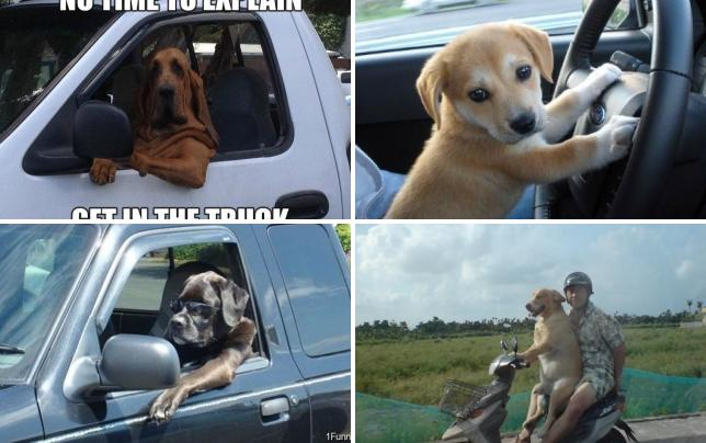 11 dogs who like to drive hurry up