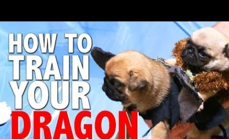 How to Train Your Dragon... with Pugs!