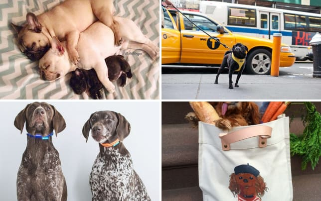 21 famous dogs on the internet 3bulldogges
