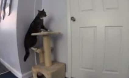 Dog and Cat Work as Team, Plot Kitchen Escape