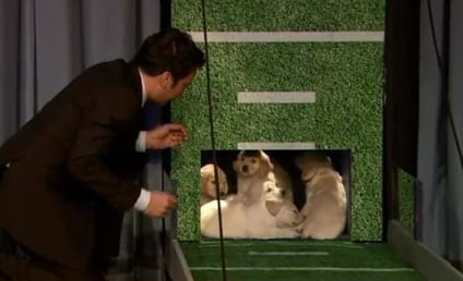 Puppies Predict Super Bowl Champion on Jimmy Fallon