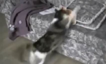 Cat Does Battle with Cardboard Cat: It's On!