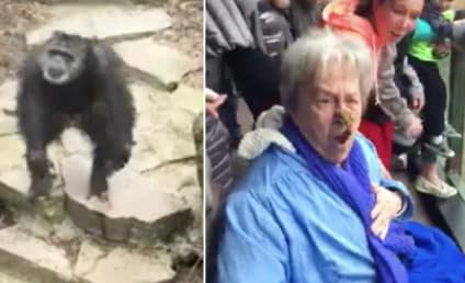 Chimp Hurls Feces at Zoo Goers, Nails Grandma in the Face