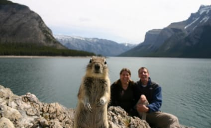 21 Awesomest Animal Photobombs: Click, LOL Now!