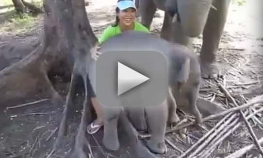 Elephant Sits on Woman's Lap