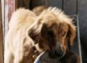A Dog's Purpose Premiere, Press Junket Canceled Amid Animal Abuse Scandal